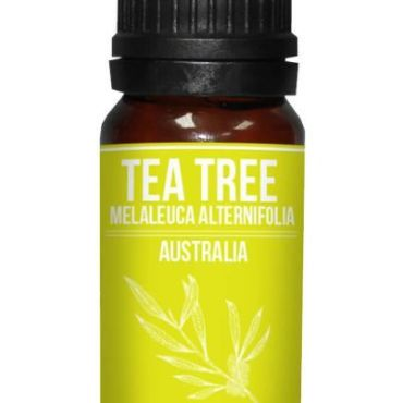 Tea Tree Essential Oil Melaleuca alternifolia properties and buy online