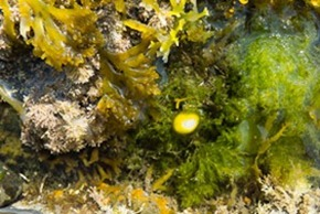 Seaweed and sponges