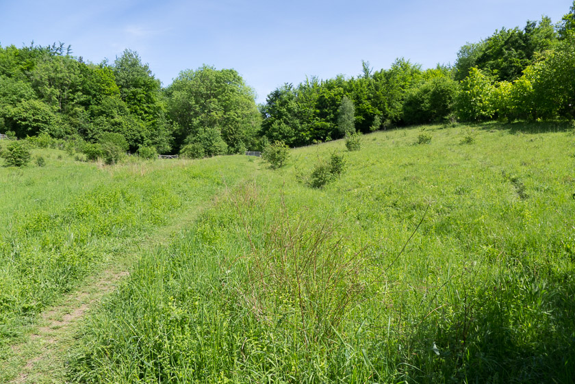 Chalk meadows at Homefield Wood, Buckinghamshire.