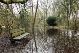 The woodland footpath