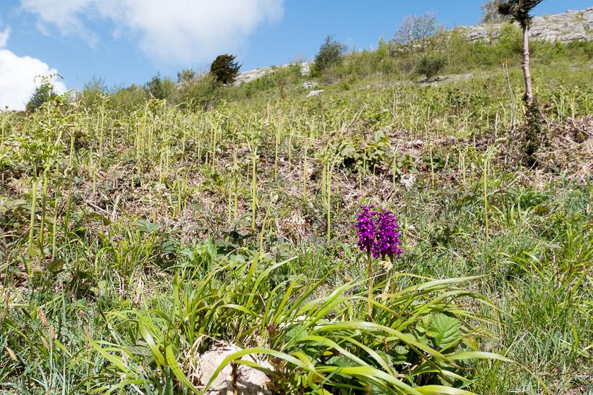 Scrubby hillside of Arnside Knott