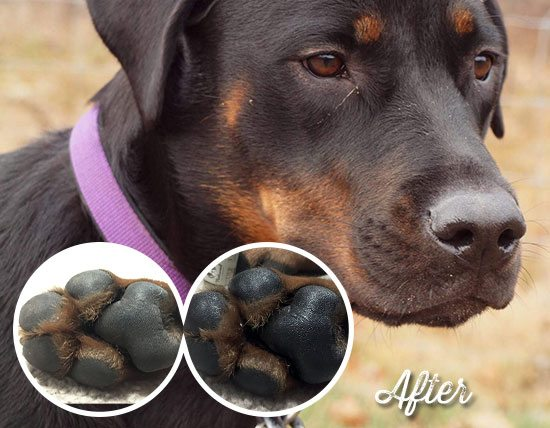 roxy with paw soother using natural ingredients