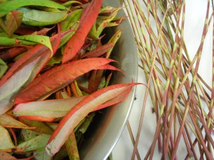 Sumac leaves, stripped from the branches