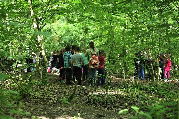 Students learning in a forest.