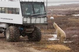 curious-bear-looking-at-cam