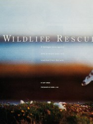 Cover of 2000 Boys' Life: Wildlife Rescue