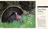 Cover of 2013 Fall Big Sky Journal: One Huge Turkey - Solitude, Freedom, Activism