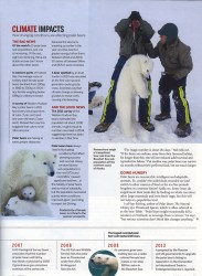 Cover of 2013 May BBC Wildlife: Saving The Polar Bear?