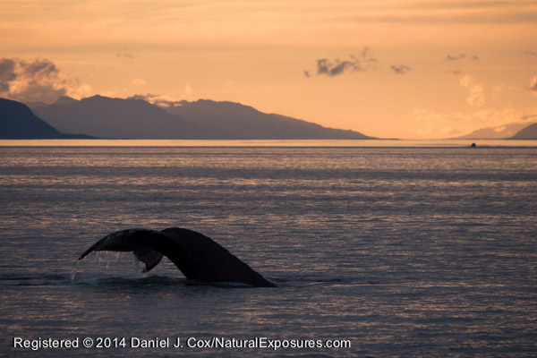 A beautiful sunset ends the day on Fredric's Sound in SE Alaska.