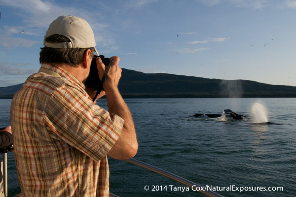 Dan photographing humpback whales in SE Alaska using the Lumix GH4 with the 100-300mm lens. Lumix GM1 with 12-32mm zoom