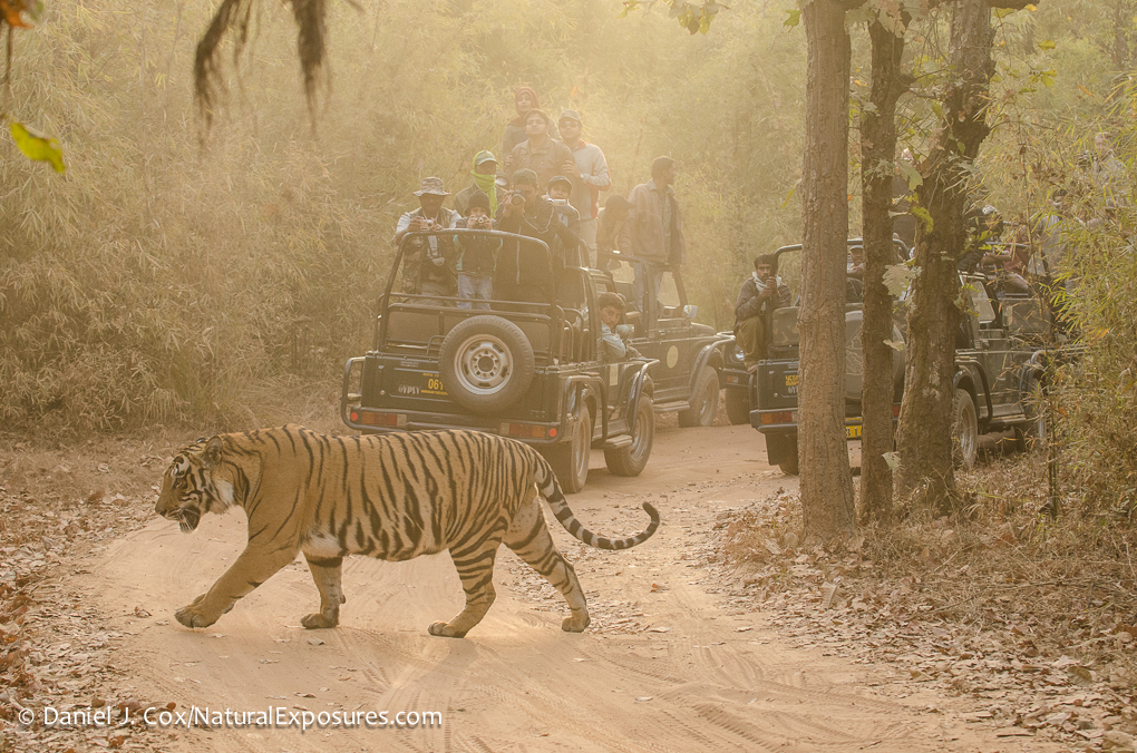 Like these tourists in India, hikers and photographers may deter poachers in Malaysia.