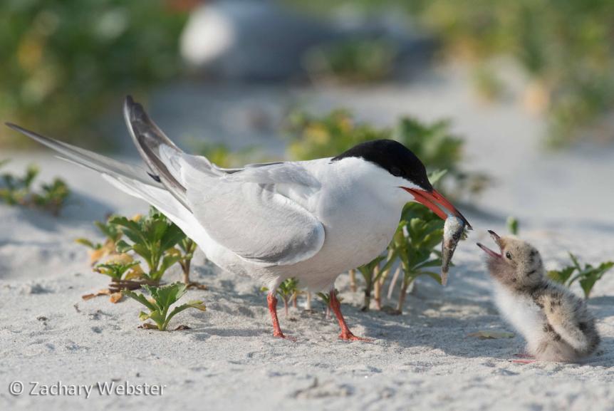 Bird Photo by Zachary Webster