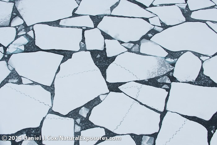 Polar Bear tracks crossing broken ice in the Beaufort Sea. Arctic Ocean.