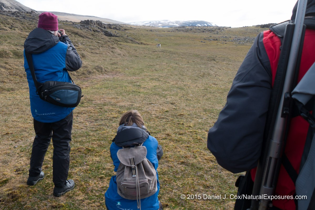 Explorer Cathy Pemberton using hand holding the Lumix FZ1000 to photograph a Svalbard Reindeer at Kapp Lee. Our guide stands by with his rifle over his shoulder inc as a polar bear unexpectedly come son the scene.  Svalbard, Norway.