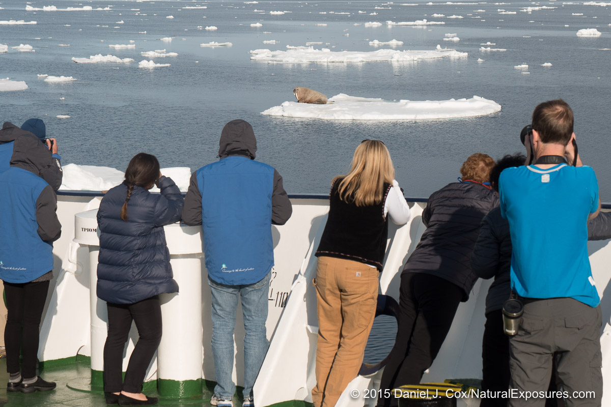The group photographs a walrus hauled out on a chunk of ice. Svalbard, Norway. Lumix GH4 with 12-35mm F/2.8