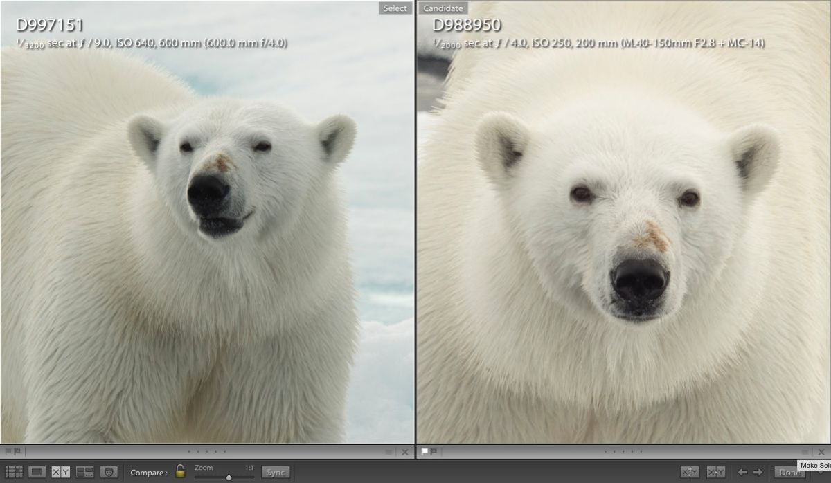 Once again these are 100% enlargements in Lightroom. the image on the left is the Nikon D4 with the 600mm F/4 and the image on the right is the Lumix GH4 with the 40-150mm F/2.8 with the 1.4X teleconverter. Nikon price tag about $19,000. Price of the Lumix and Olympus combination about $3200. Wow, again hard to believe.