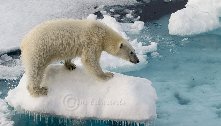 Jims Photos Svalbard-288.jpg