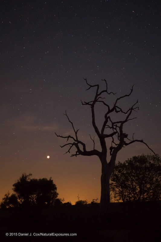 Don't forget vertices. The Blood Moon rises over the Londolozi landscape in South Africa. Lumix GX8 with 15mm Leica Summilux F/1.7 ISO 800