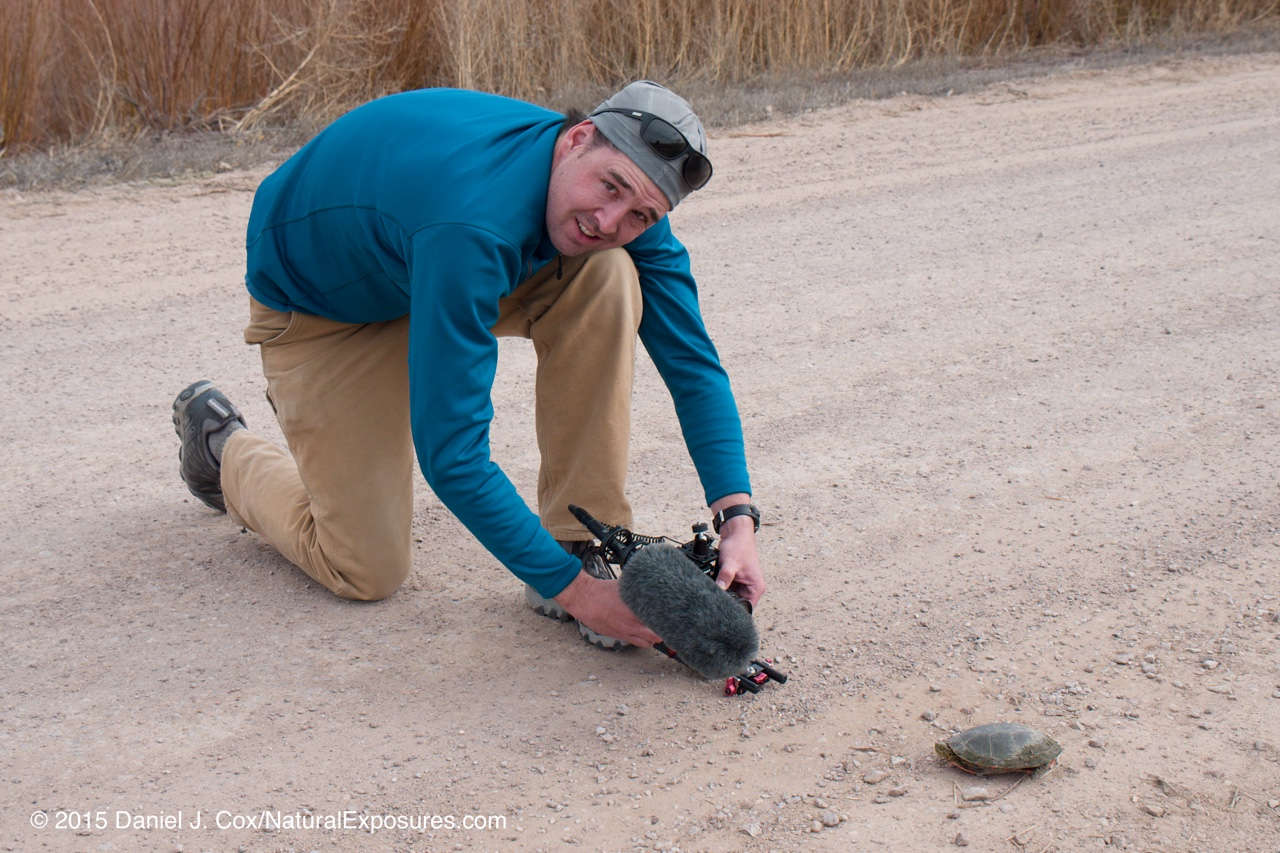 Henry Harrison filming a painted turtle at the Bosque Del Apache National Wildlife Refuge. New Mexico,