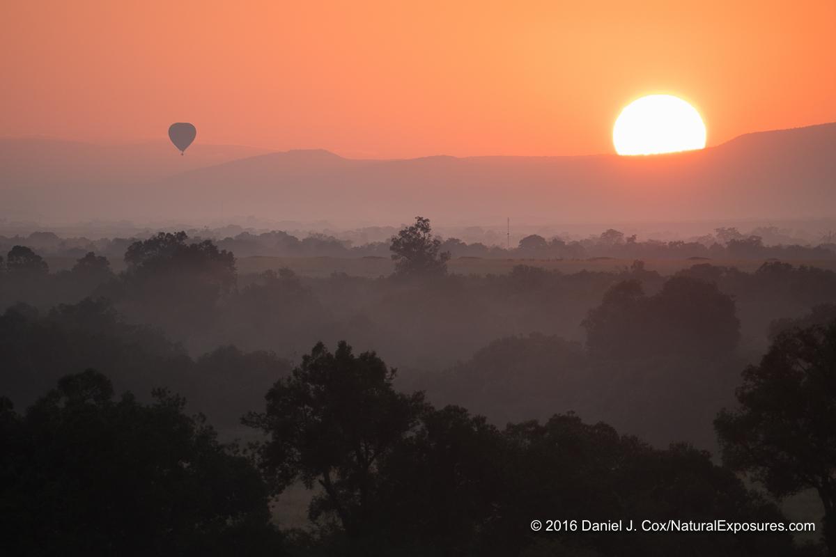 A hot air balloon rises above the Masai Mara Game Reserve at sunrise. Kenya