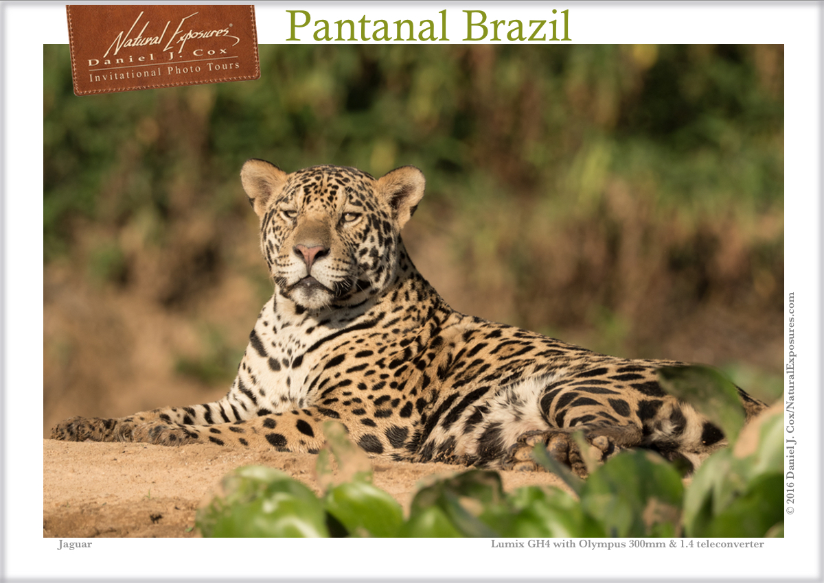 Facebook IPT jaguar
