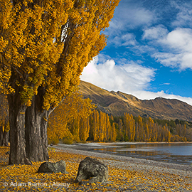 AEPKTN Autumn colours on the lakeside at Wanaka, South Island, New Zealand