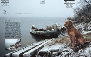 A Golden Retriever sitting on the banks of the Missouri River after a duck hunt.
