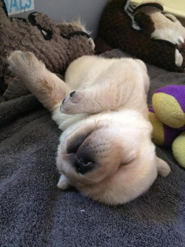 Christine's puppy