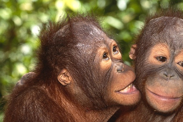 Photo for 2019 Orangutans, Dragons, and Temples Photography Tour