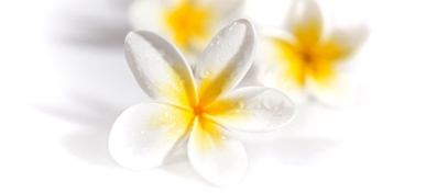 Resultado de imagen de Gardenia tahitensis