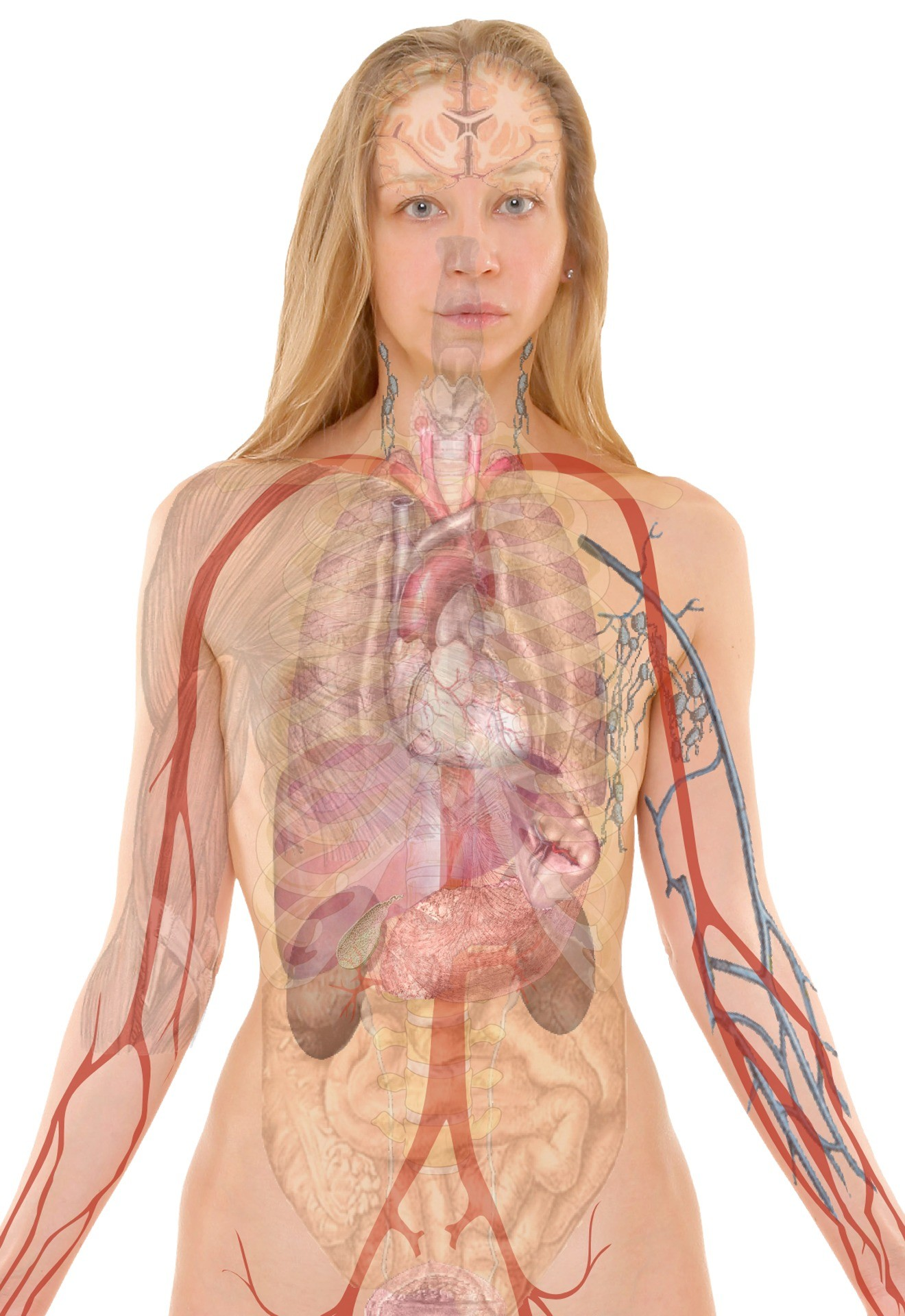 Where Is The Heart Located Within The Human Body