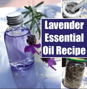 Easy Recipe of Making Lavender Oil