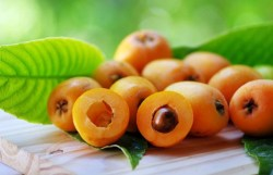 loquat fruit benefits
