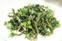 18 Top Herbs That Kill Parasites 2