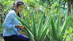 woman sitting in front of aloe vera plant
