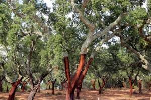 Cinnamon Tree Health Benefits 6