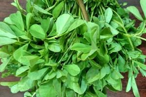Fenugreek Plant Health Benefits 1