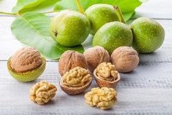 English Walnut Tree Health Benefits 1