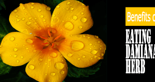 Benefits-of-Eating-Damiana-Herb