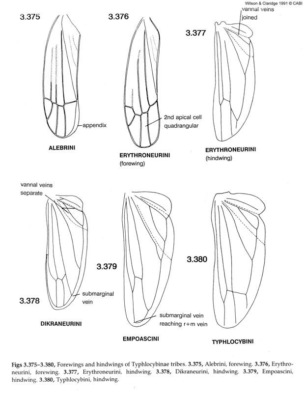 Leafhopper, Planthopper & Psyllid Vectors of Plant Disease