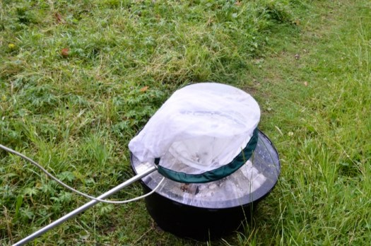 A light trap with net in the morning to prevent any escapees. © Sue Snell