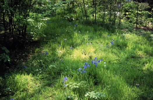 Woodland glade in 2003