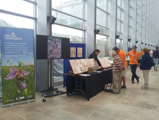 Orchid Observers at Big Nature Day