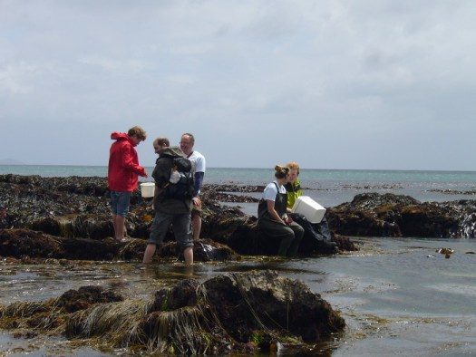 Professional scientists and citizen scientists collecting data at Looe BioBlitz, 2013