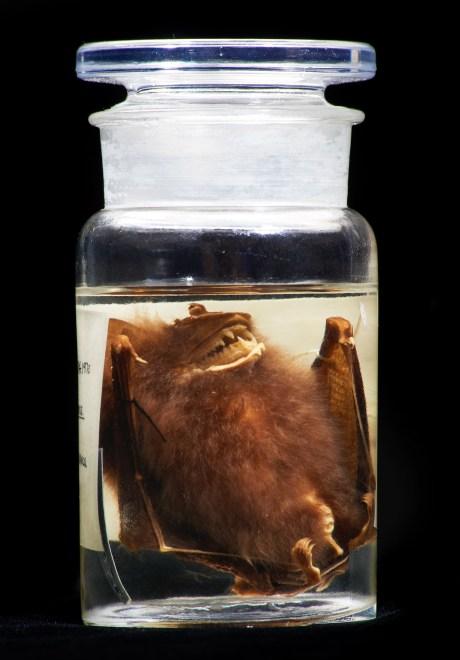 Photo of the specimen in its storage jar