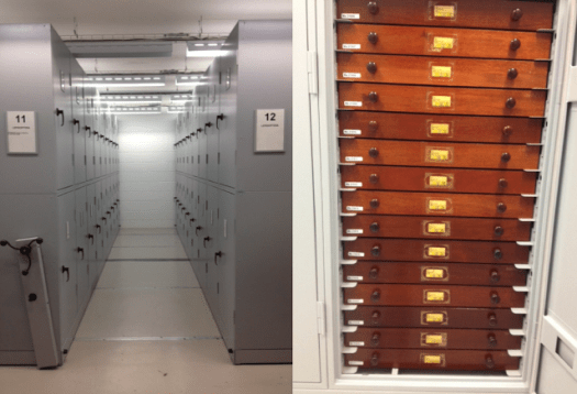 Photo showing the Museum's storage of the entomology collection.