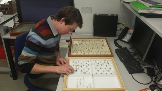 Photo showing Anthony moving a specimen into an new drawer