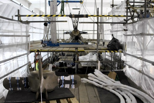Photo showing bones at different stages of being wrapped and protected for removal, lying on the scaffolding