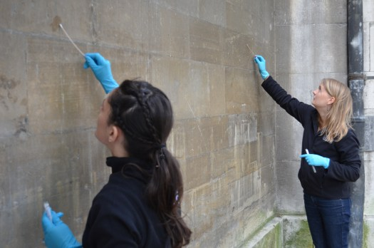 Two female staff rub cotton wool swabs across the surface of a stone wall.