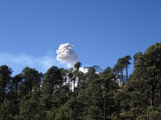Photo showing a tree line with the peak of Popo just visible. Rising above the peak, a plume of ash drifting leftwards in the wind.